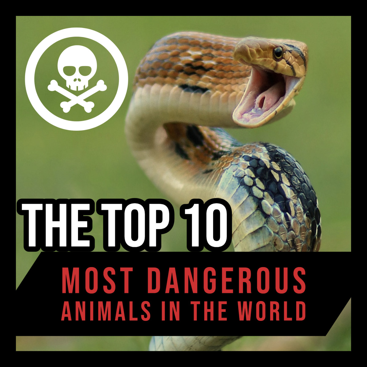 The Top 10 Most Dangerous Animals in the World.