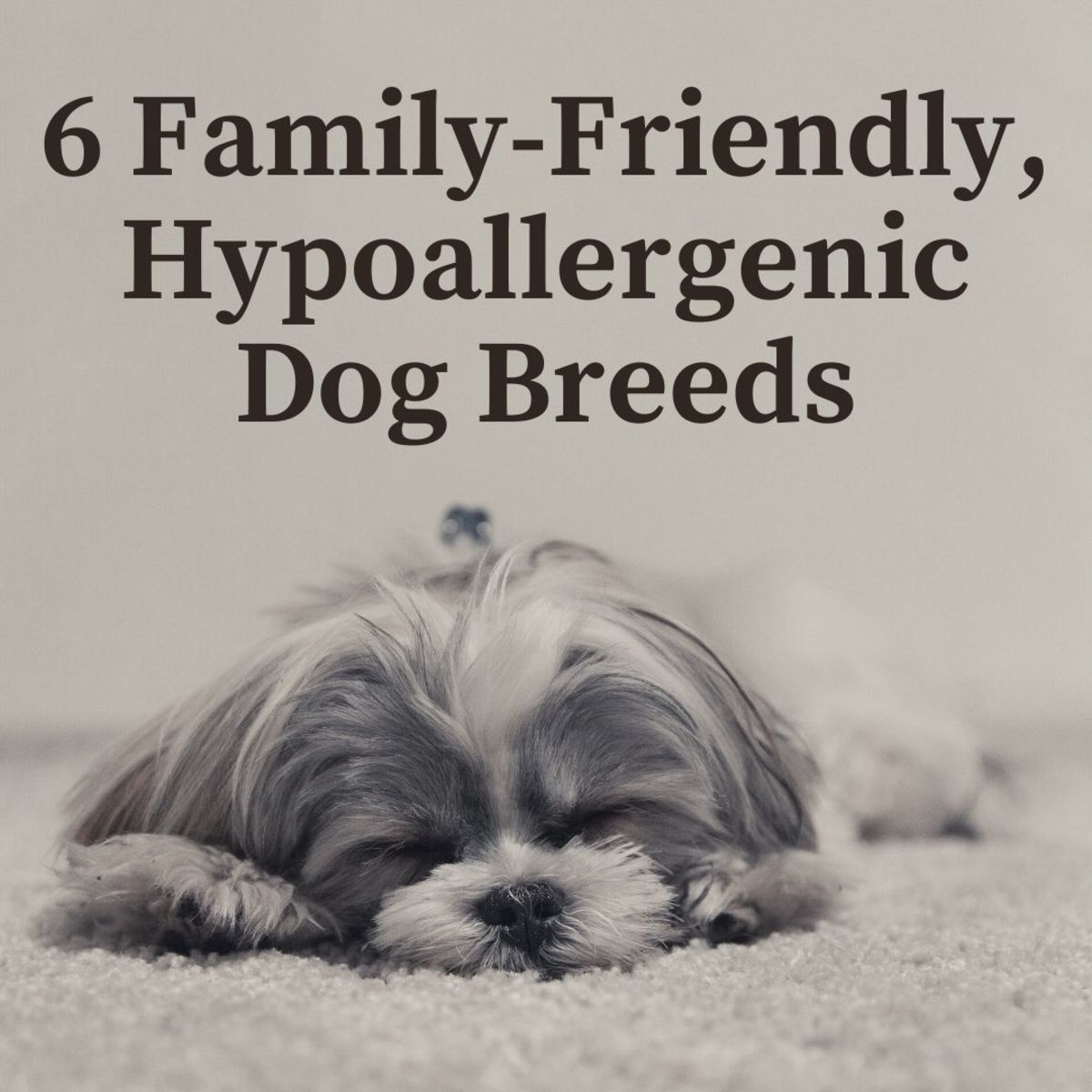 6 Hypoallergenic Dog Breeds That Are Great With Kids