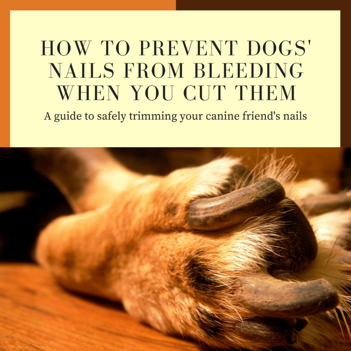 How to Prevent Dogs' Nails From Bleeding When You Cut Them