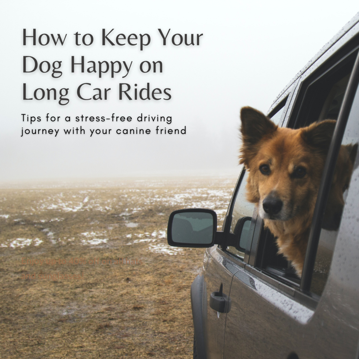 This guide will help you keep your dog calm and happy during long car rides.