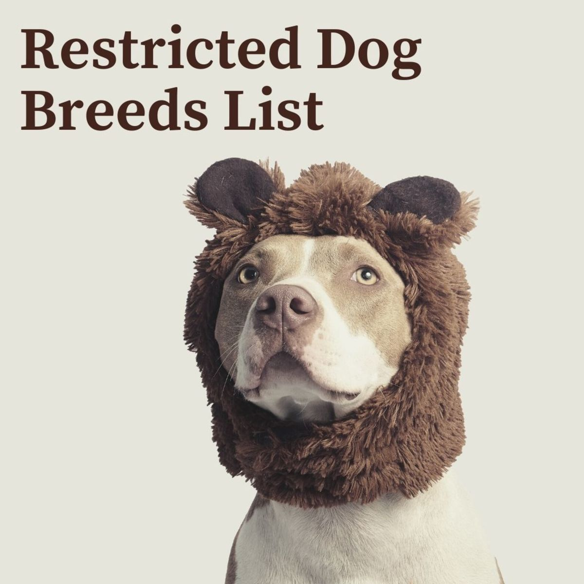 75 Banned or Restricted Breeds: Is Your Dog on the List?