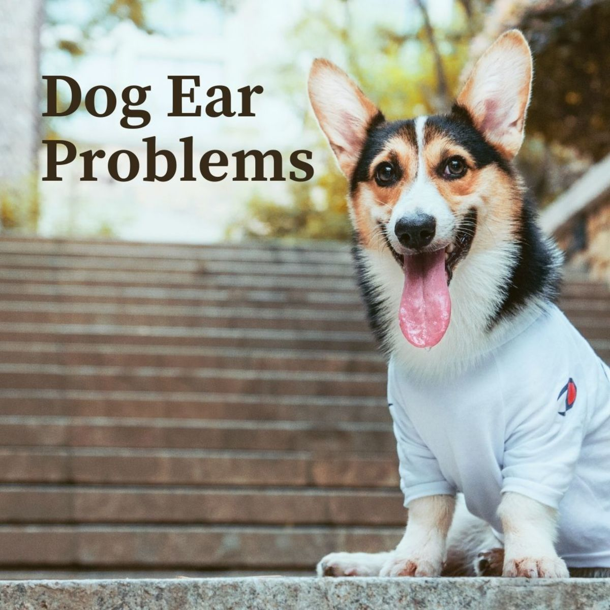 Common dog ear problems and causes, symptoms and treatment