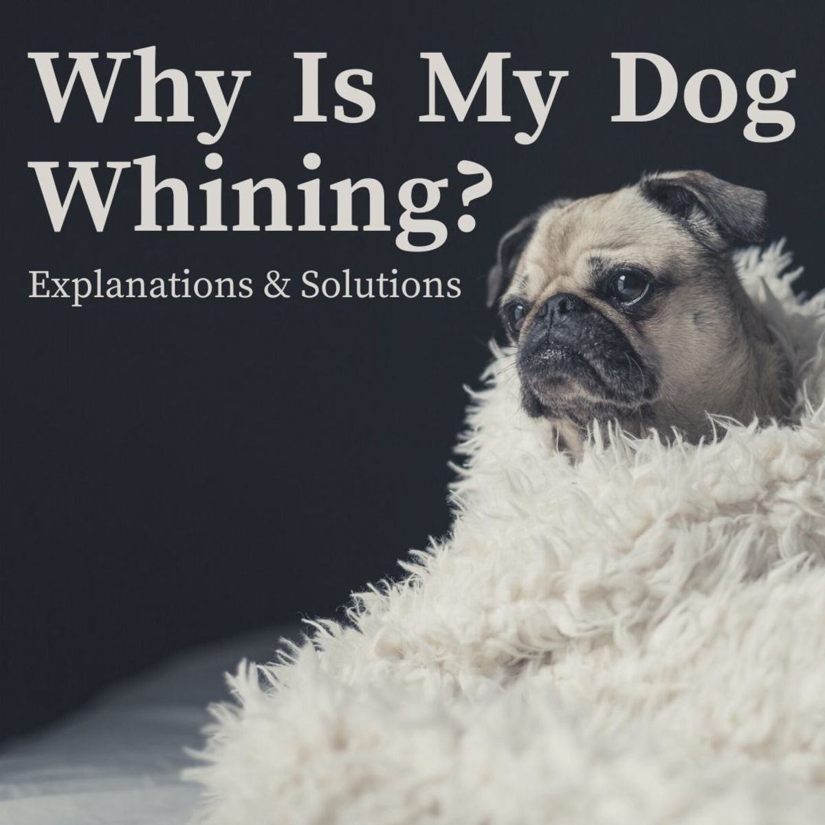 Reasons why dogs whine and what you can do about it