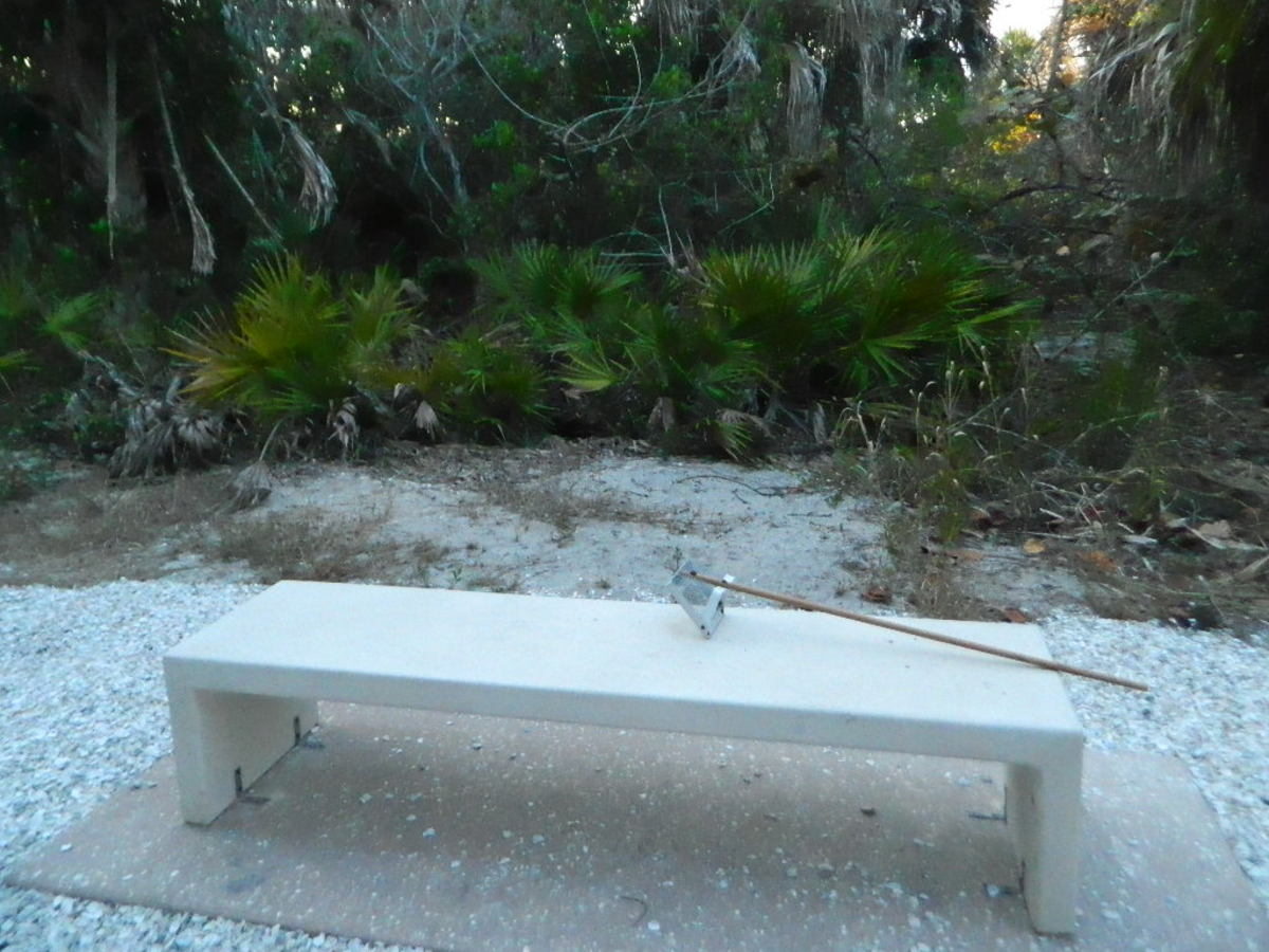visit-a-venice-beach-in-florida-search-for-shark-teeth-and-shells