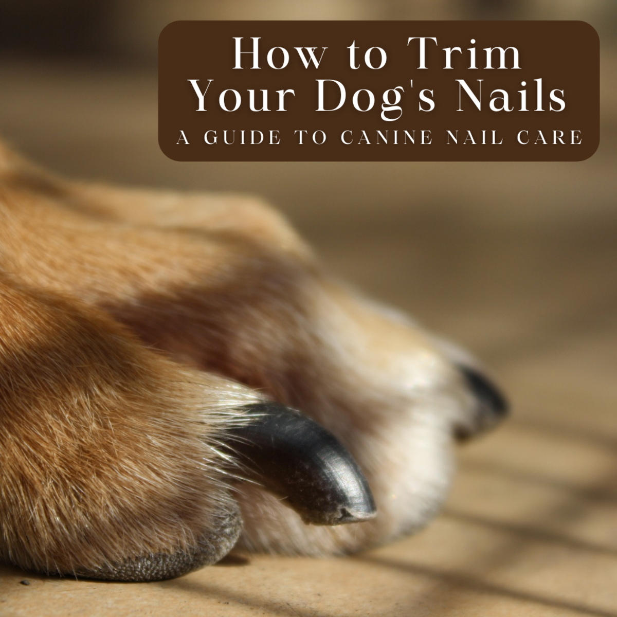 This guide will provide you with all the information you need to properly and safely trim your dog's nails.