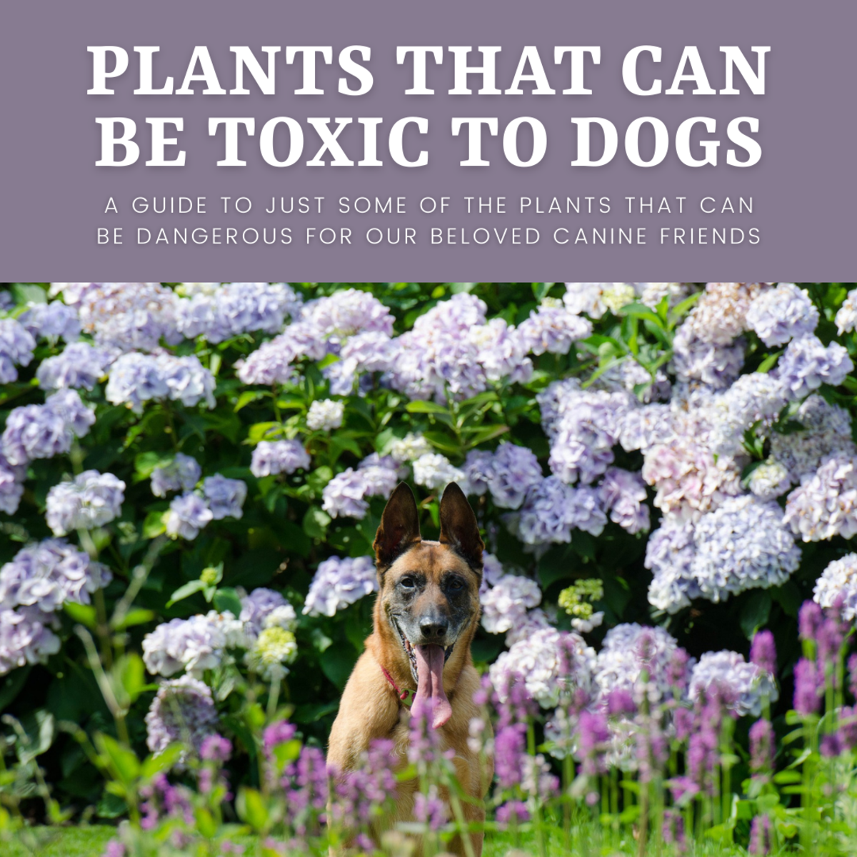 This article will provide you with a wealth of information about which plants can be toxic to dogs.