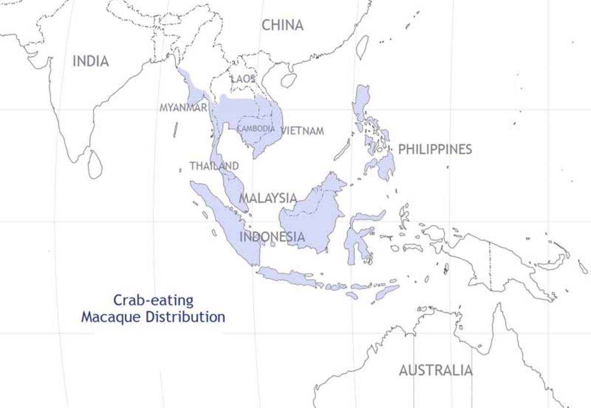 Crab-eating macaque distribution
