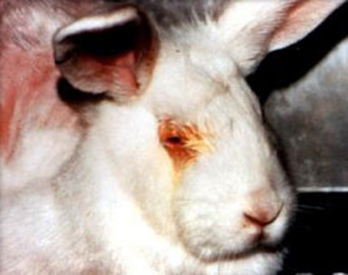 animal-testing-and-the-pain-it-causes-to-the-animals