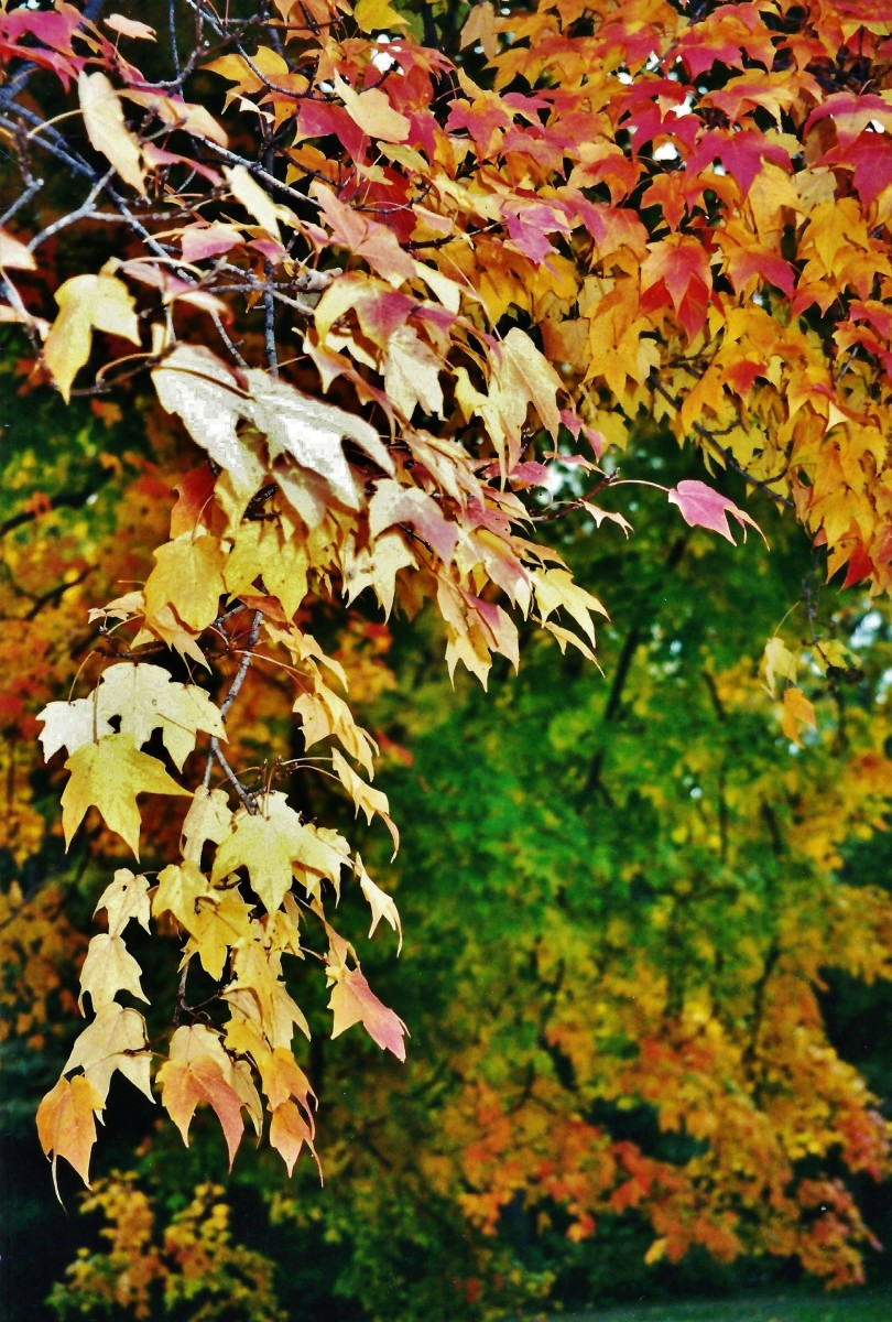 Reflections of What the Autumn Season Means