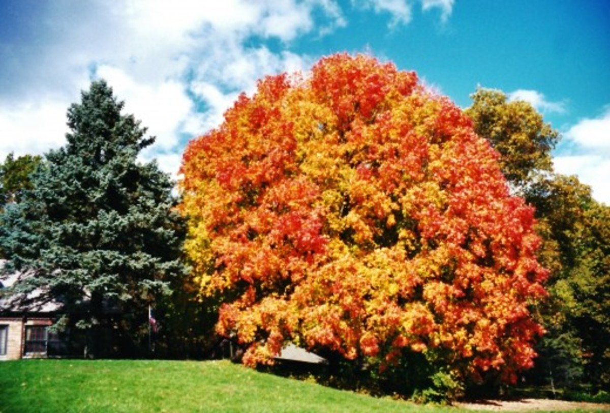 Look at that colorful tree!