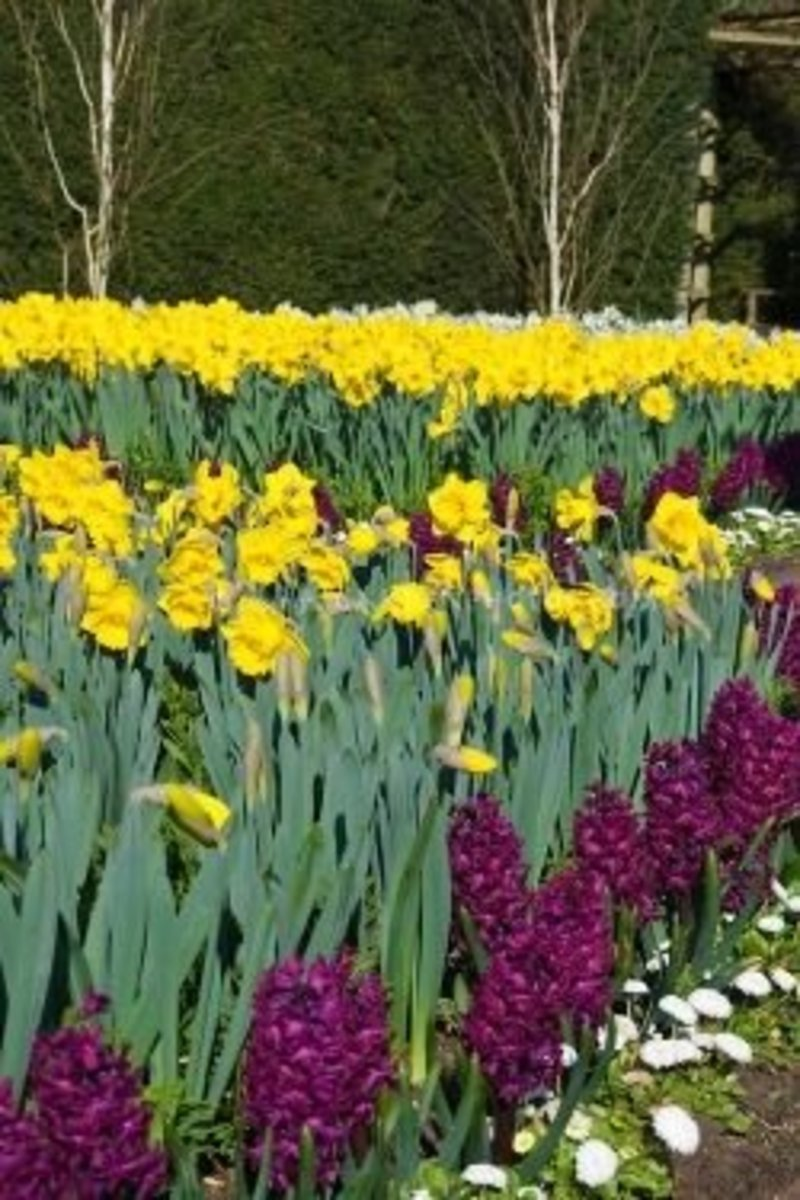Spring Bulbs and Perennials