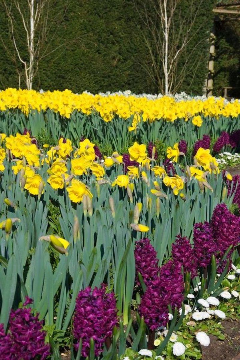 Image googe images garden-photos-com.photoshelter.com