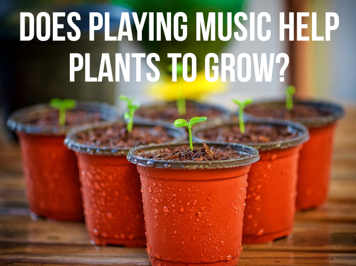 Many people believe that playing music to plants can help them to thrive.  The idea is rooted in the work and experiments of Dorothy Retallack, who covered the subject in the 1970s.  She concluded that only some types of music are good for plants.