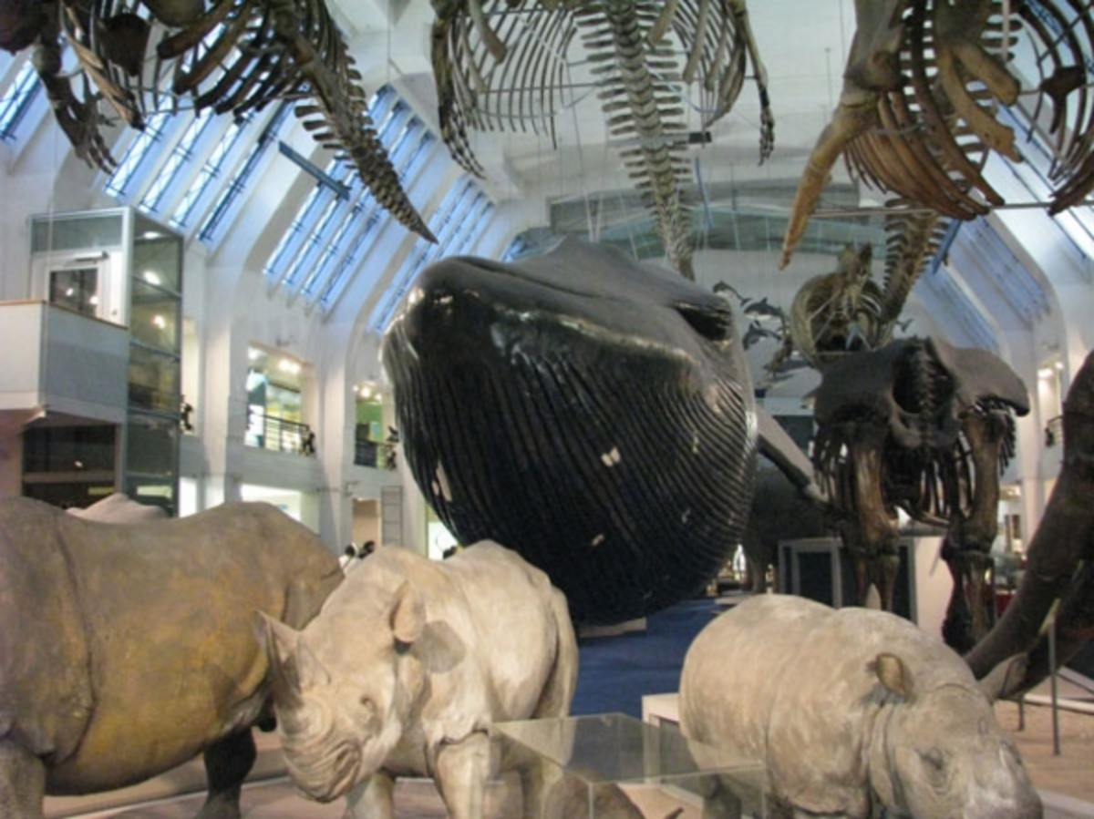 london-museums-2