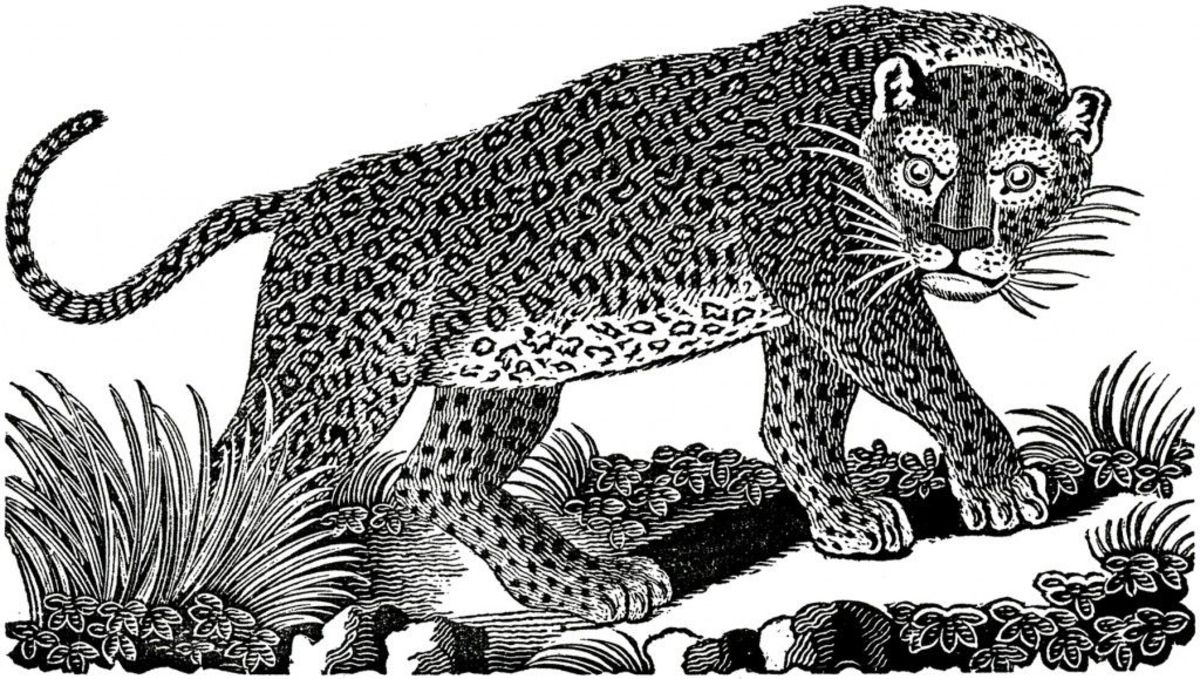 the-narcissist-is-a-liar-and-the-leopard-never-changes-his-spots
