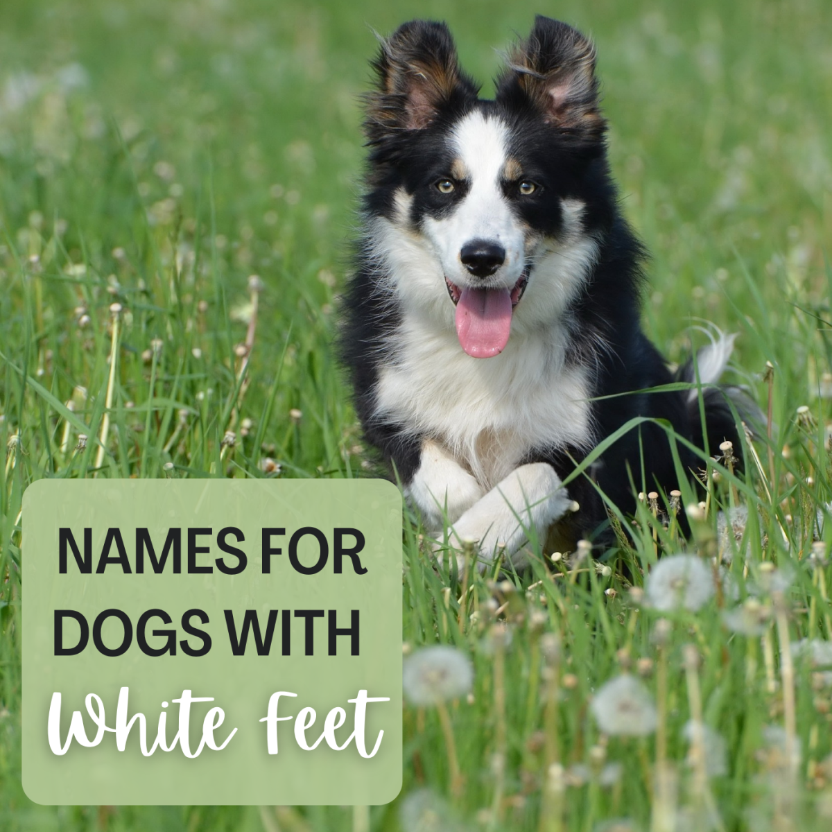 These names will be perfect for your white-footed dog!