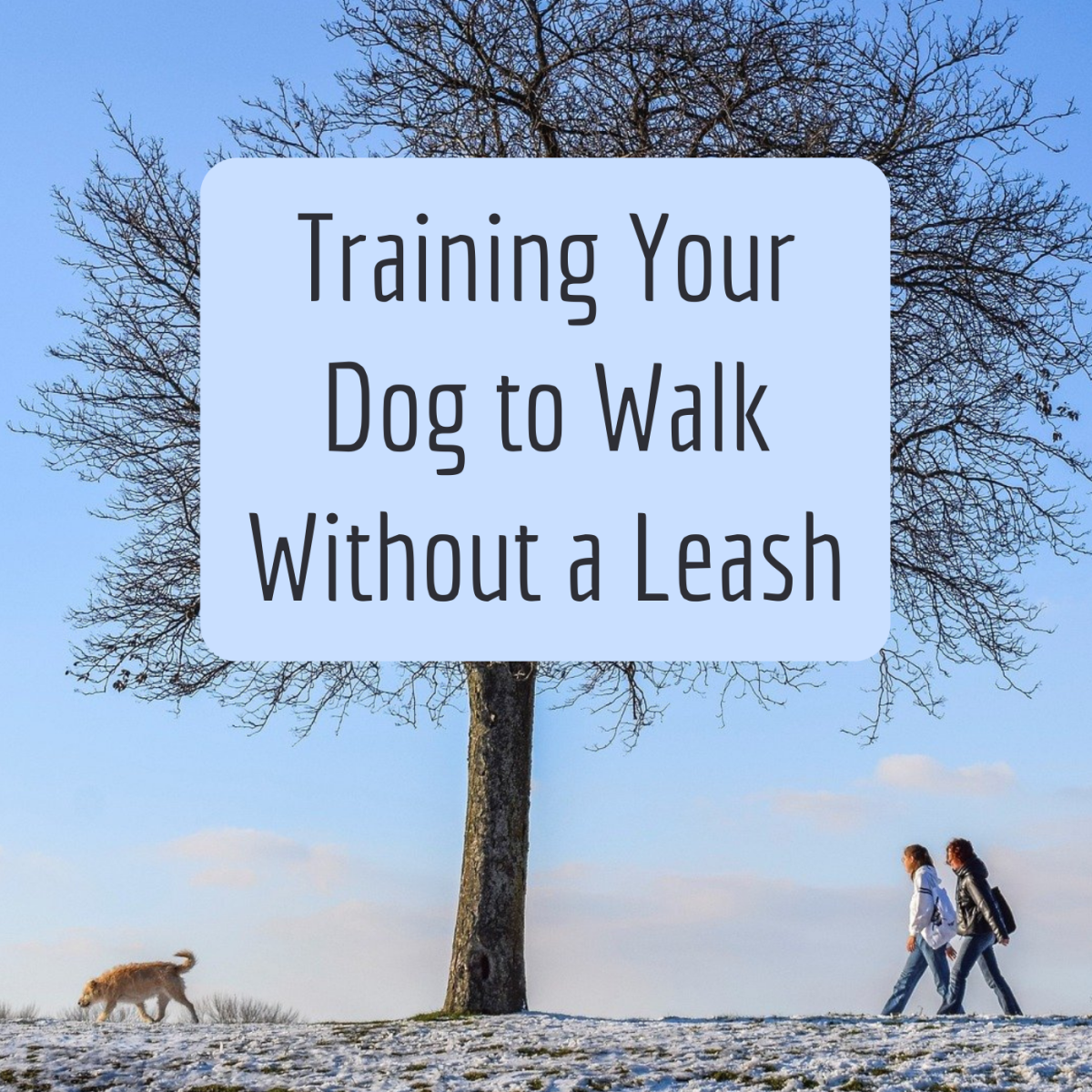 How to Train Your Dog to Walk Without a Leash