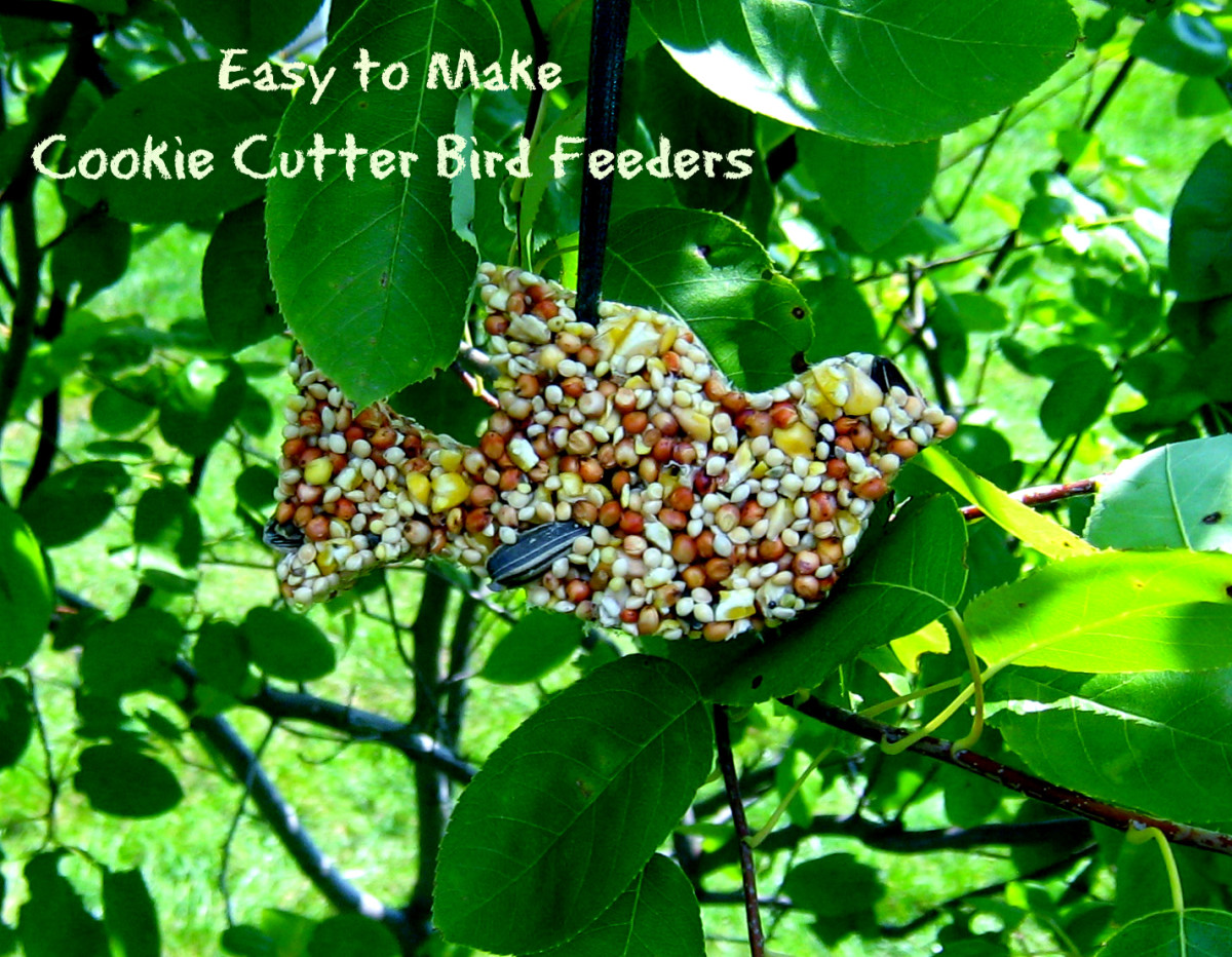 Easy Crafts for Kids:   Homemade Cookie Cutter Birdfeeder