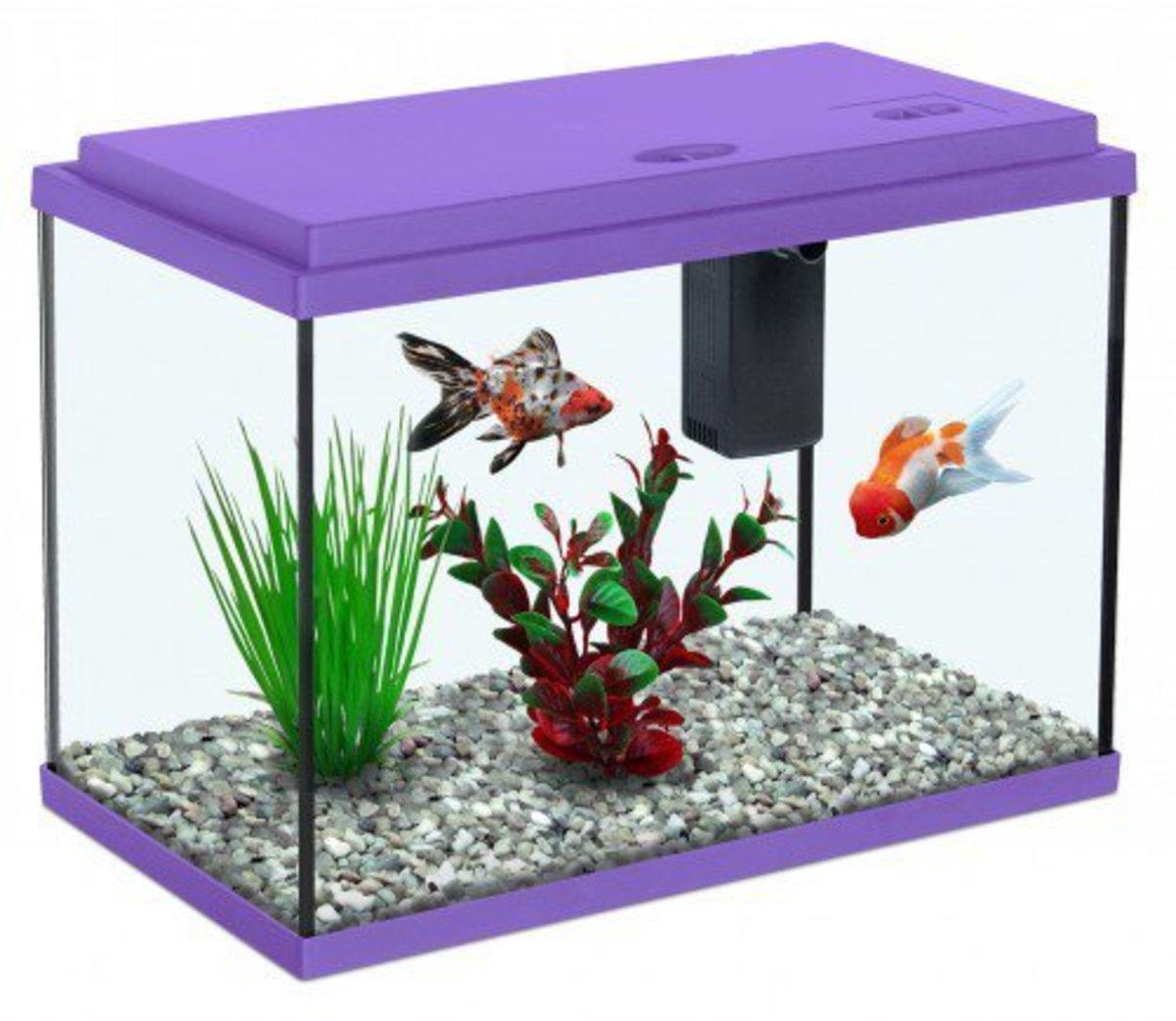 how-to-have-a-home-aquarium
