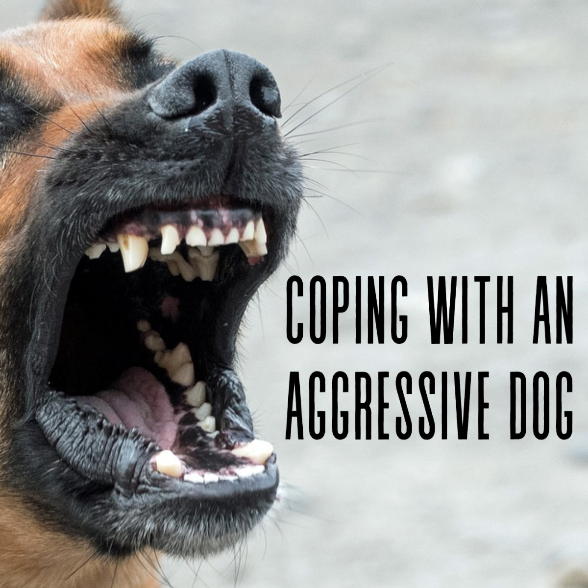 Does your dog have aggression issues, like fear aggression? In this article, I share how I have tried to manage my dog's aggression.