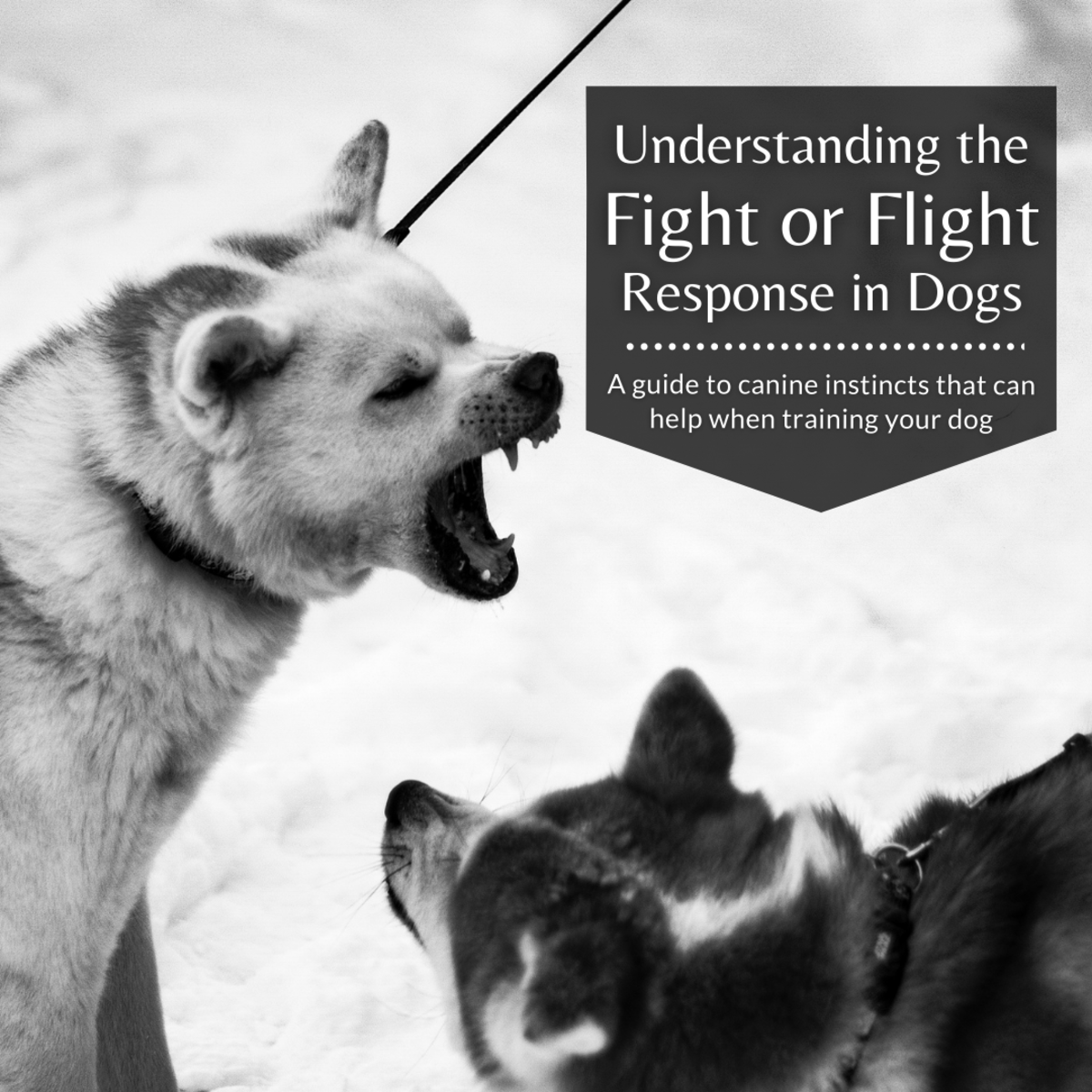 This article will help explain the fight or flight response in canines and hopefully help you in your dog training journey.