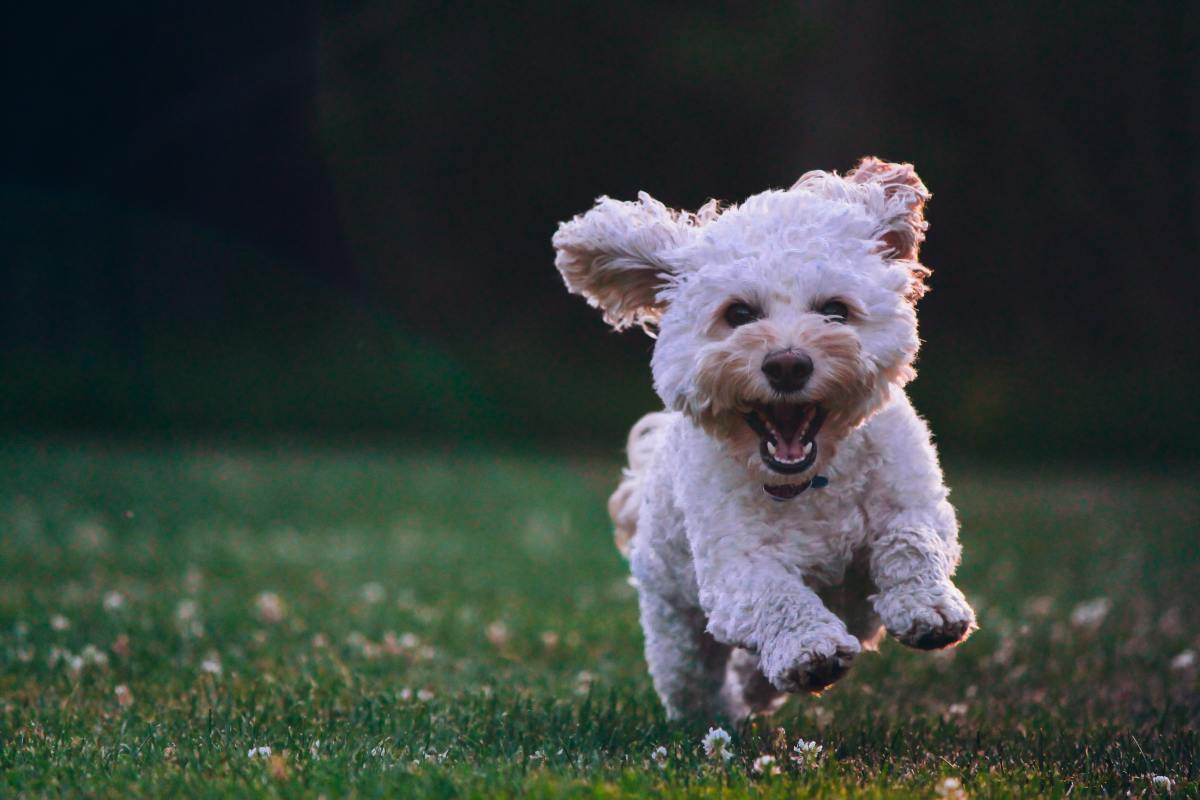 Dealing with a hyperactive dog can be a challenge—here are a few reasons your dog has so much energy.