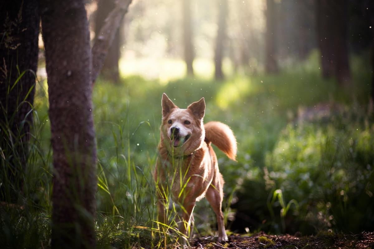 What makes a dog hyperactive?