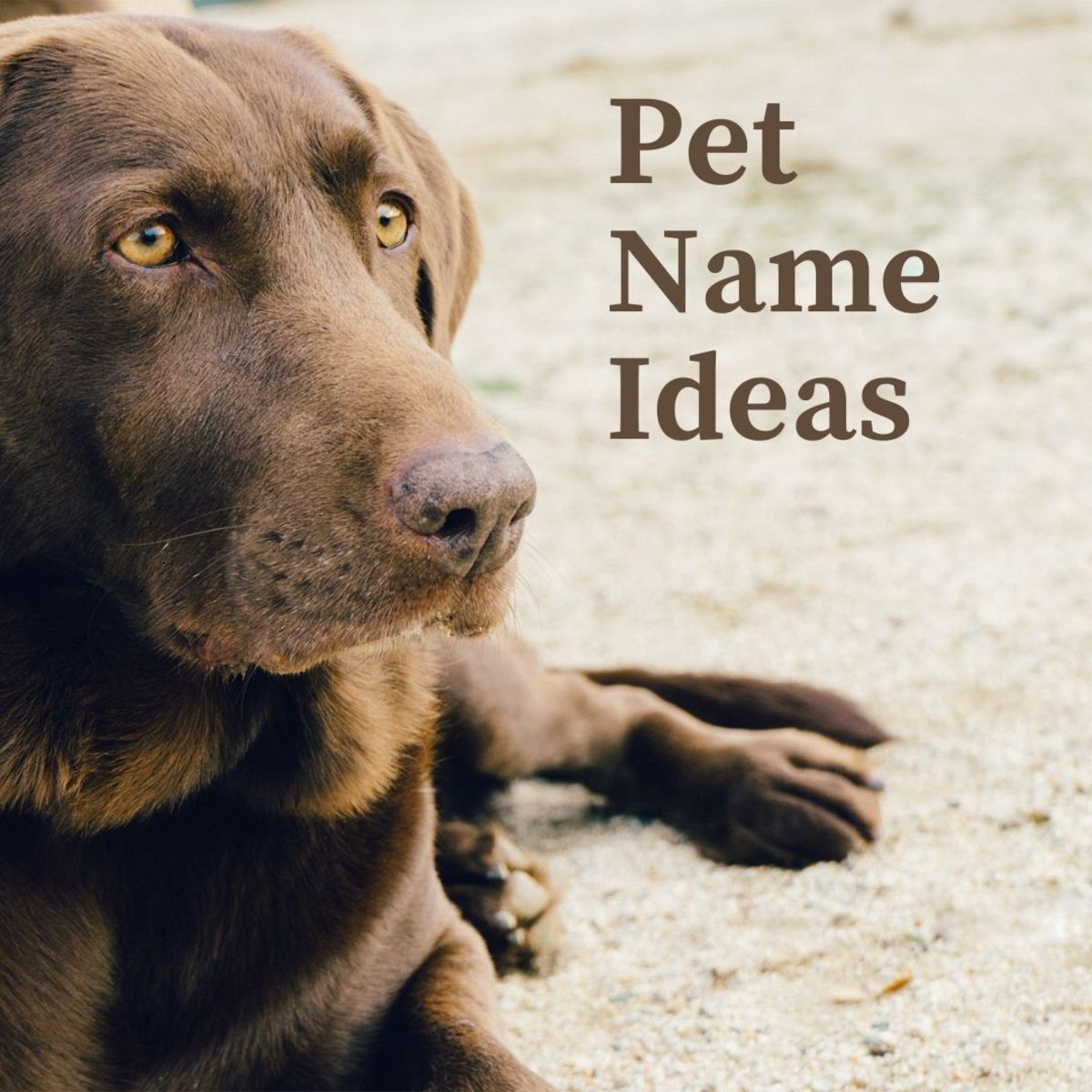 100+ cute name ideas for your pet or stuffed animal