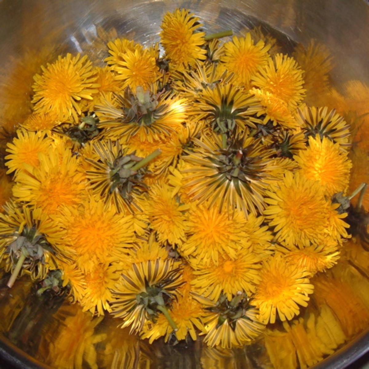 Freshly-picked dandelions