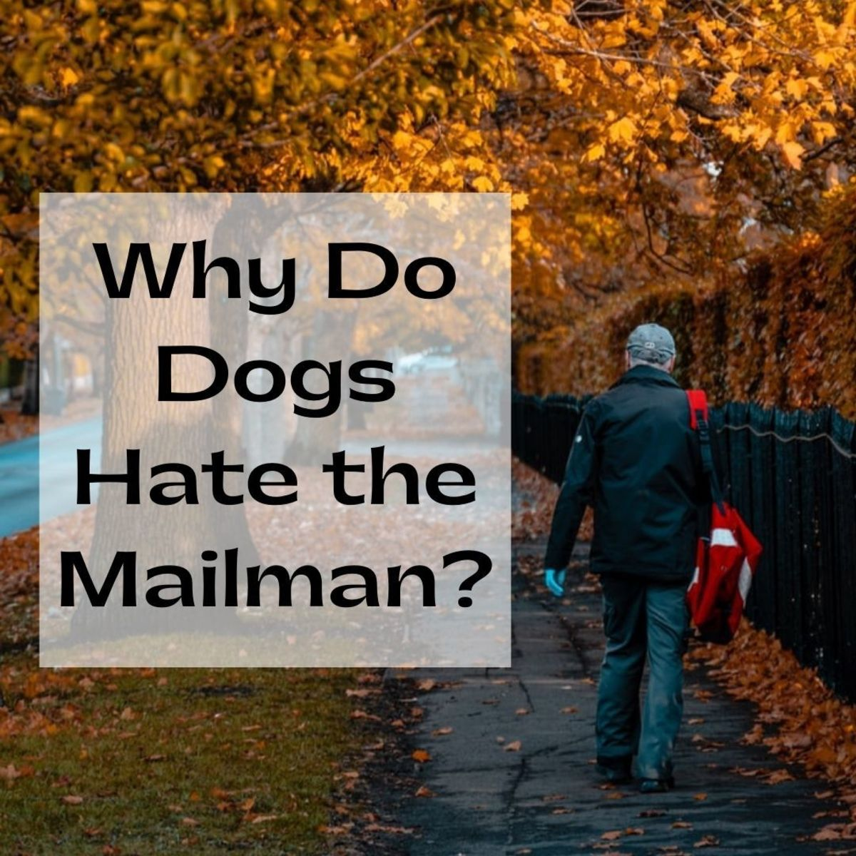 Why do so many dogs (even the seemingly friendly breeds) seem to hate the mailman?