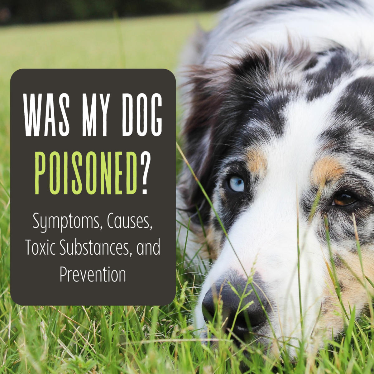 Do you think your dog may be experiencing symptoms of poisoning? Here's how to tell and what to do about it.