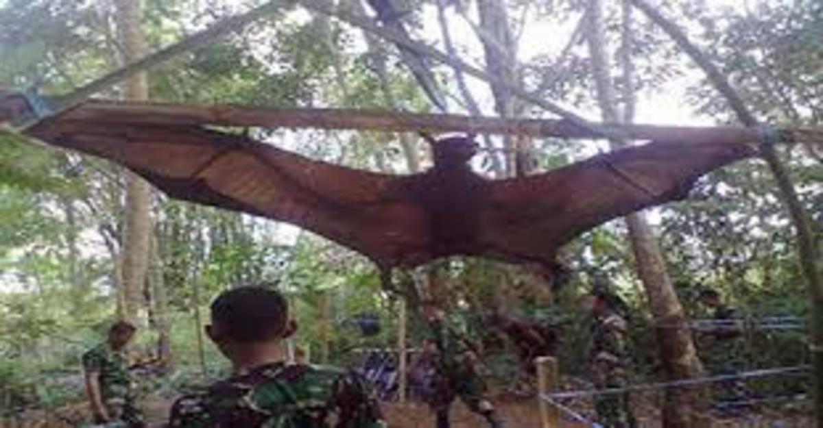Captured Orang Bati