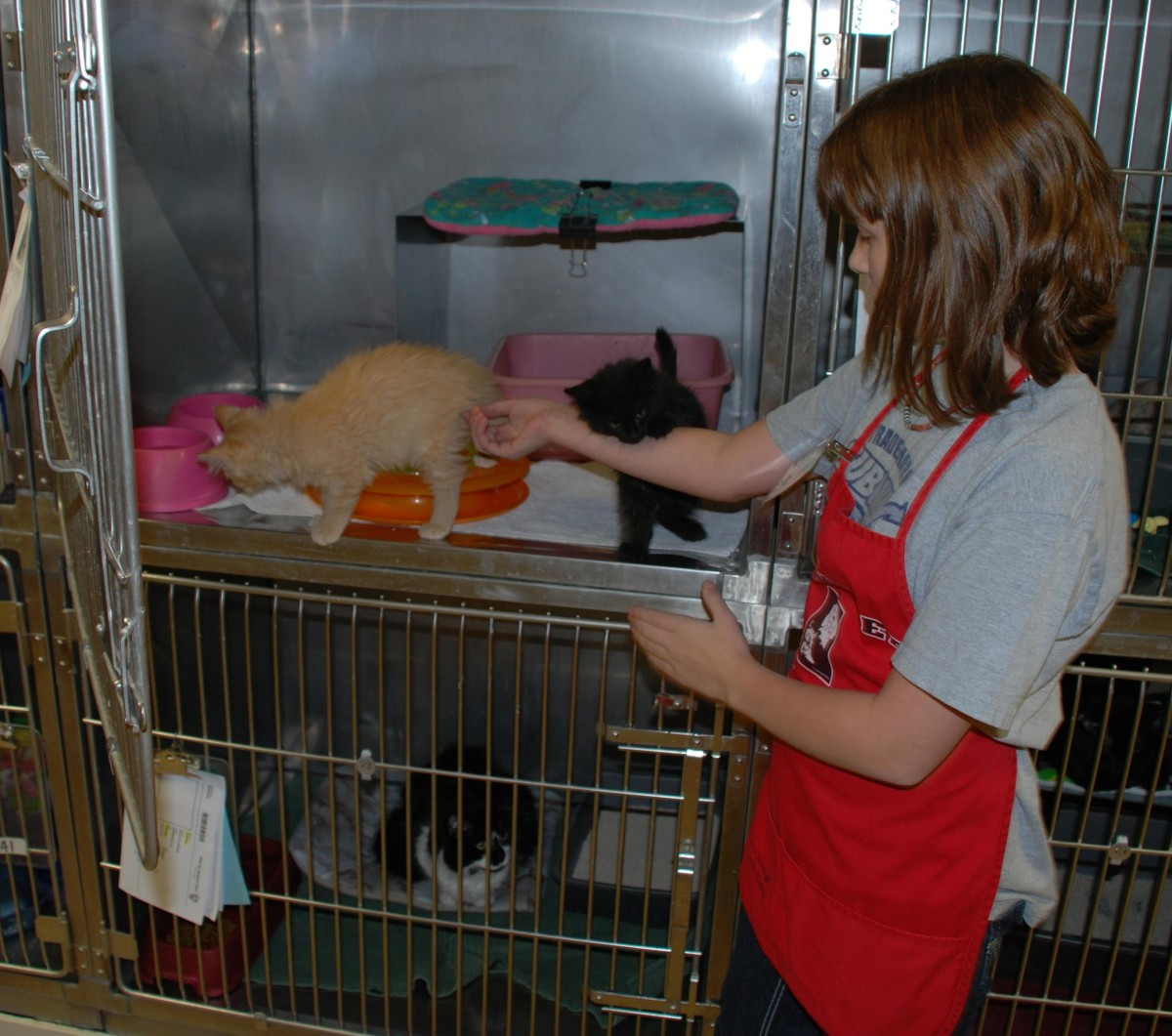 Animal shelters are often a great place for children to volunteer.