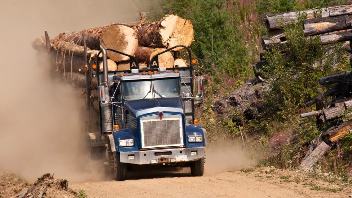 Diesel rigs help transport logs to the paper mill.