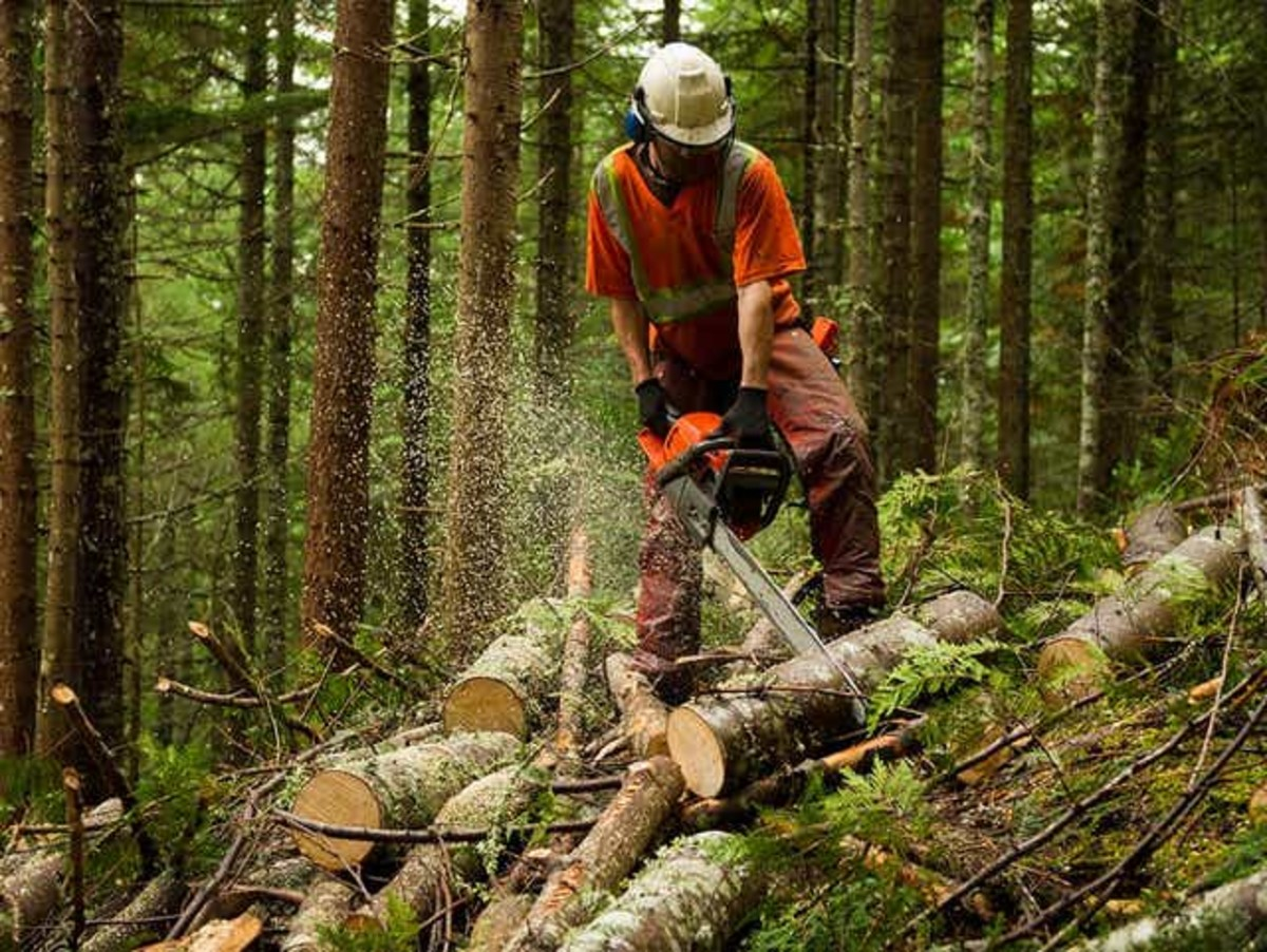 This is a commercial logger using a commercial chainsaw.