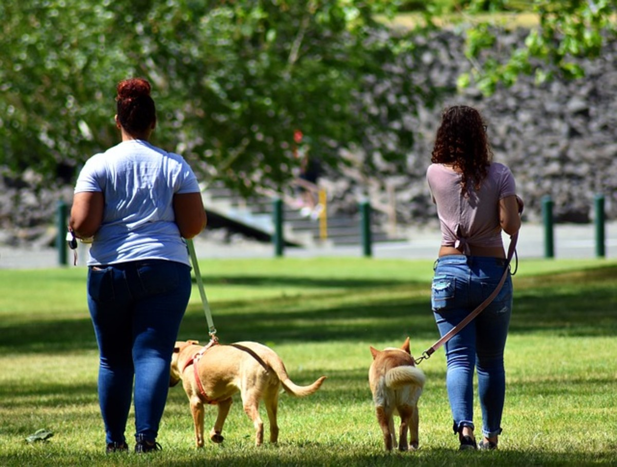 This type of walking can help if your final goal is walking both your dogs on one side.