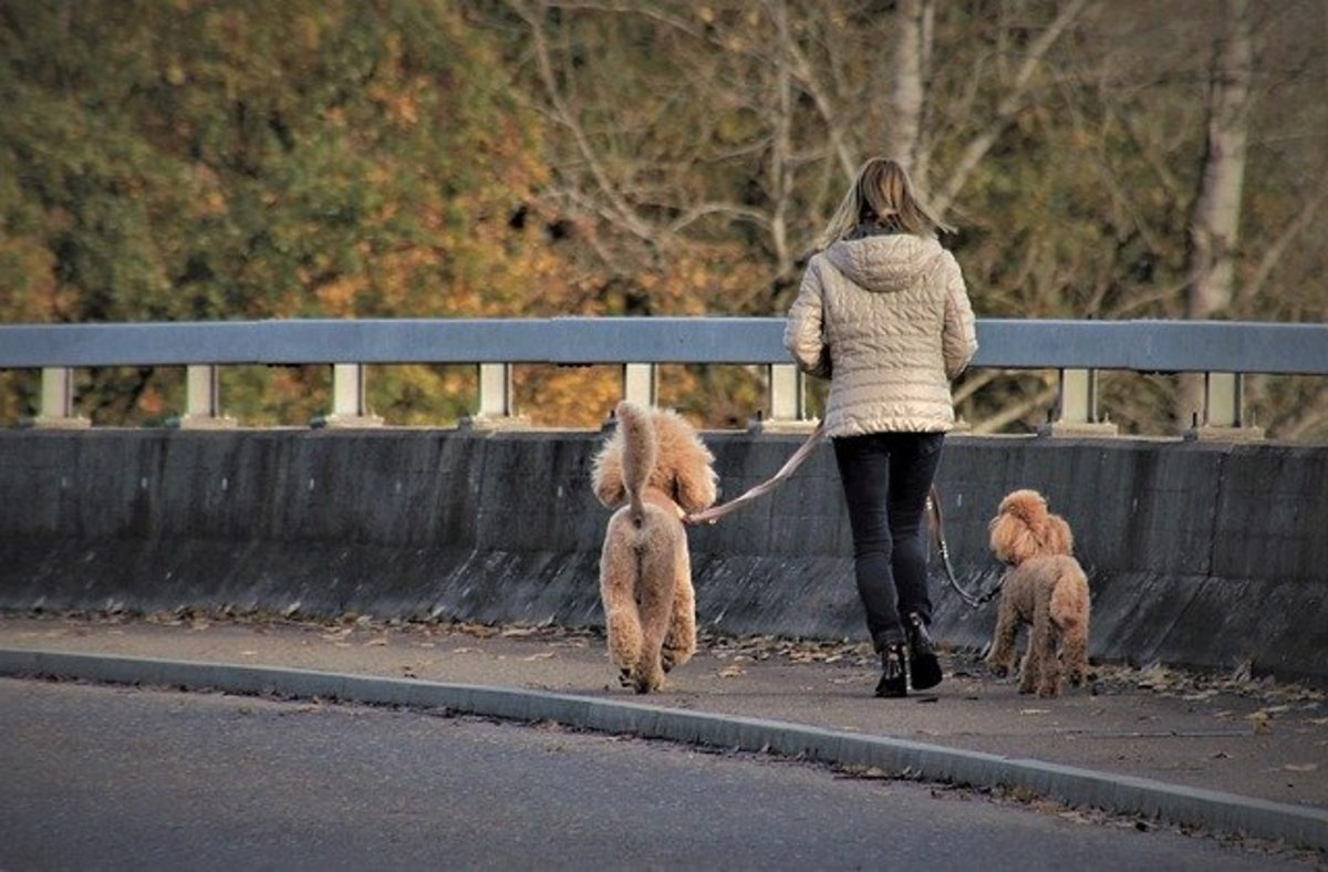 A lady walking two dogs—one on each side using two hands