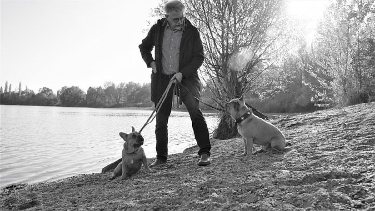 Are you struggling to walk your two dogs together?