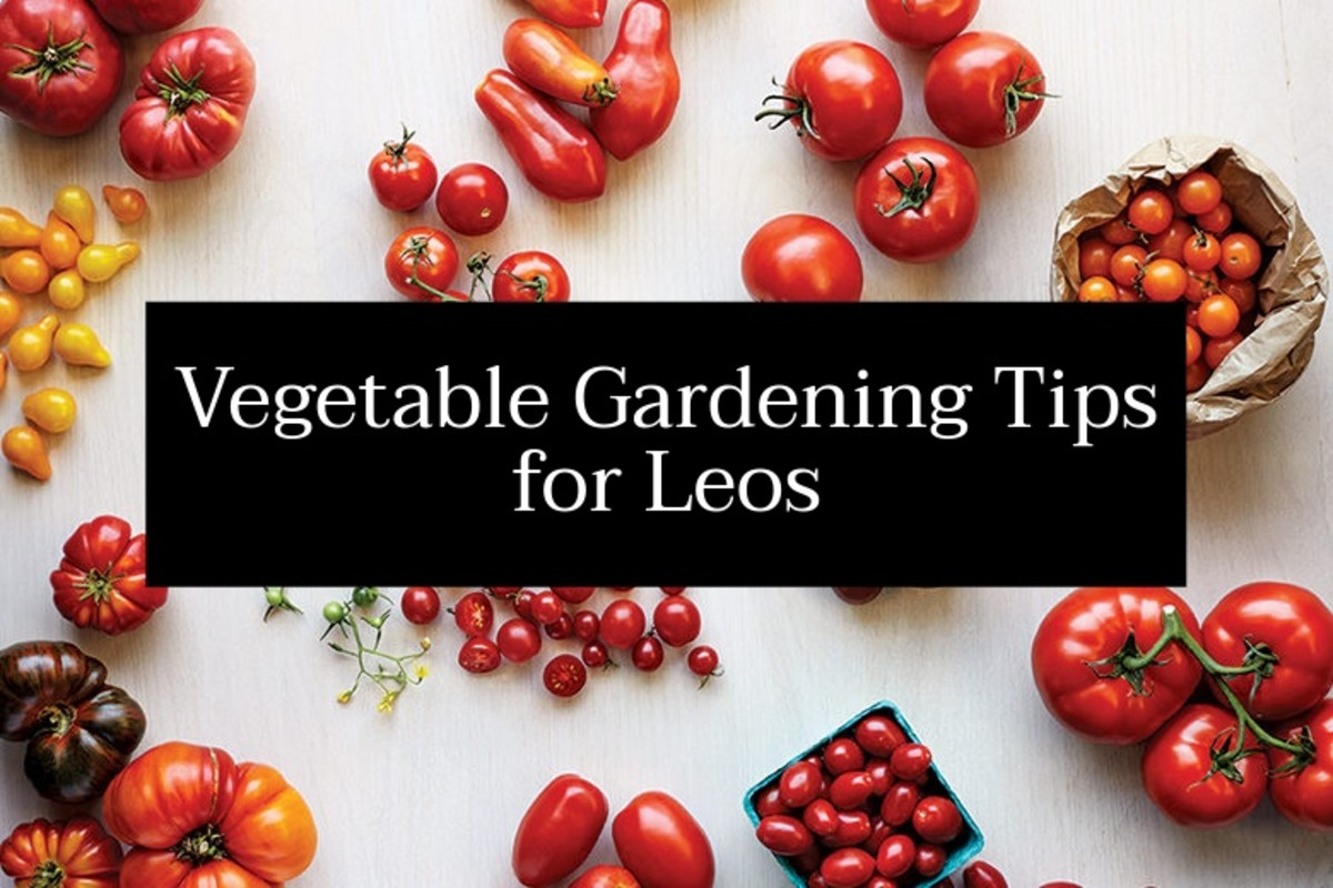 Leos should look to grow foods that are colorful, especially red, orange, and yellow fruits and veggies. Leos also love spices and hot peppers.