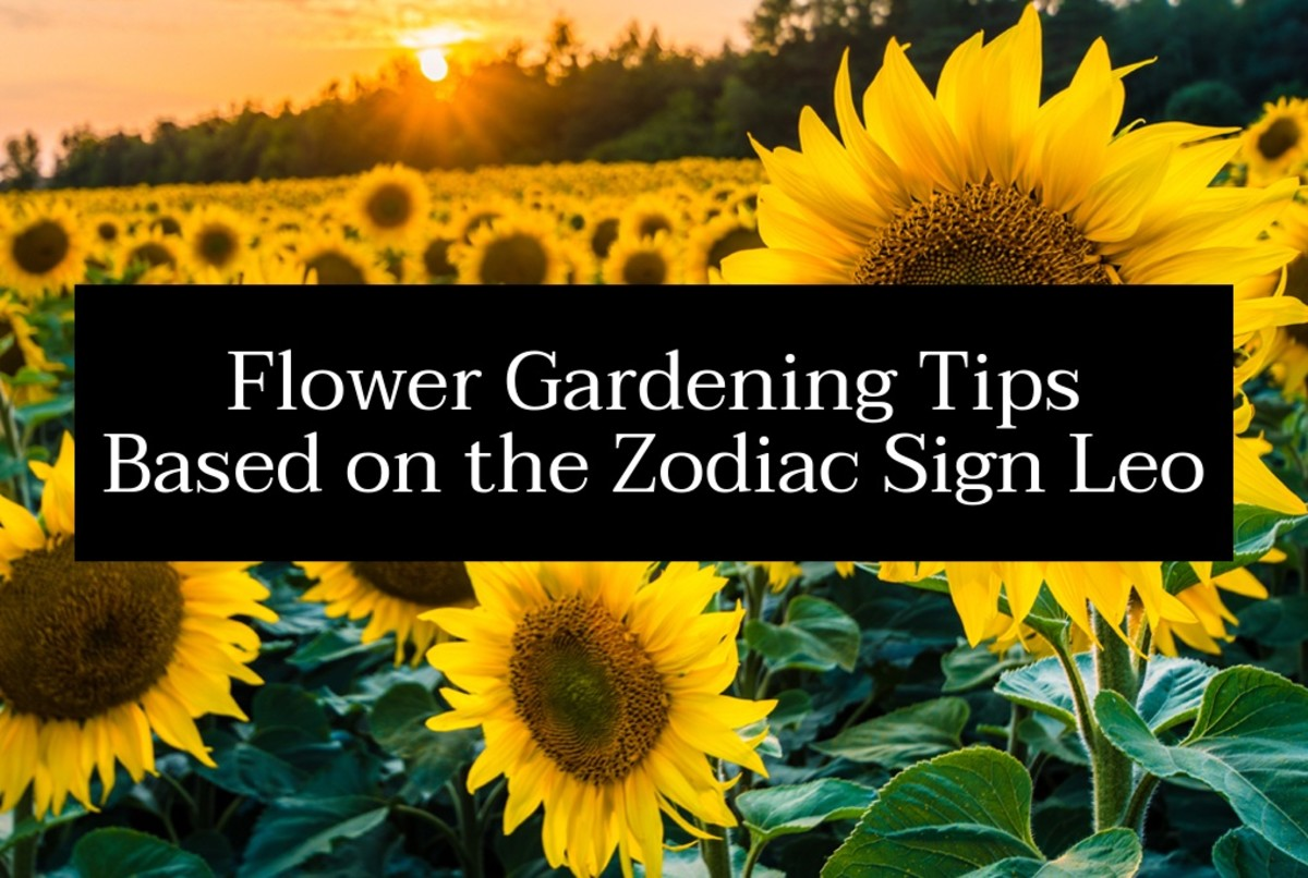 A happy Leo garden includes an array of flowers. Sunflowers and marigolds will help give the yard some happiness and boisterousness. Leo likes flowers that are big, loud, colorful, and spark joy.