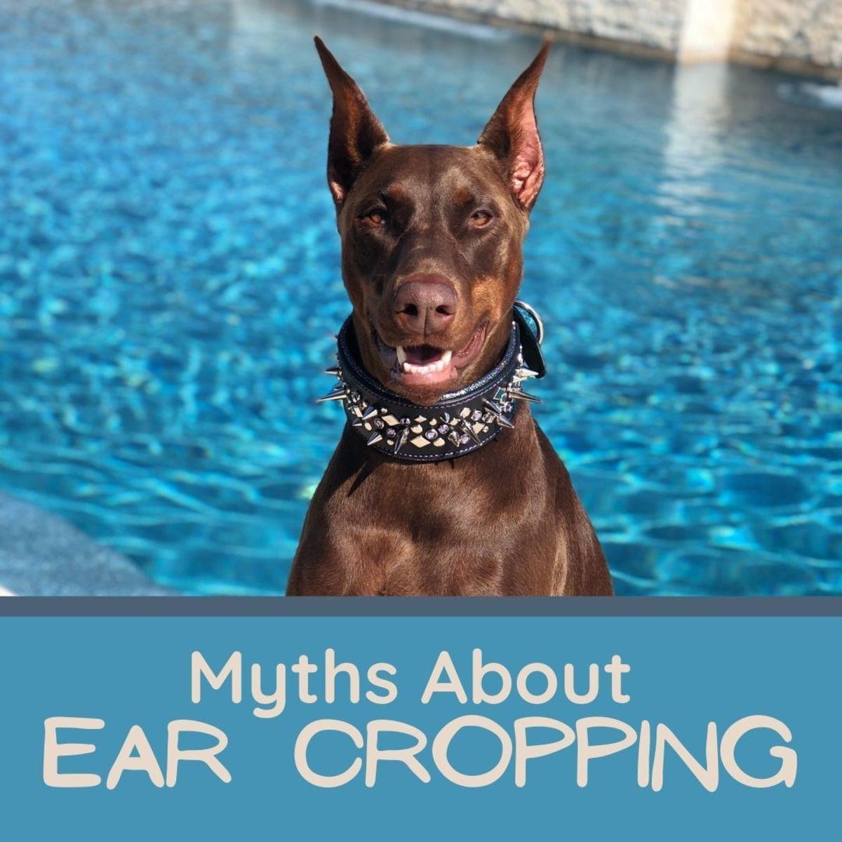 Does ear cropping hurt dogs? Is it cruel?