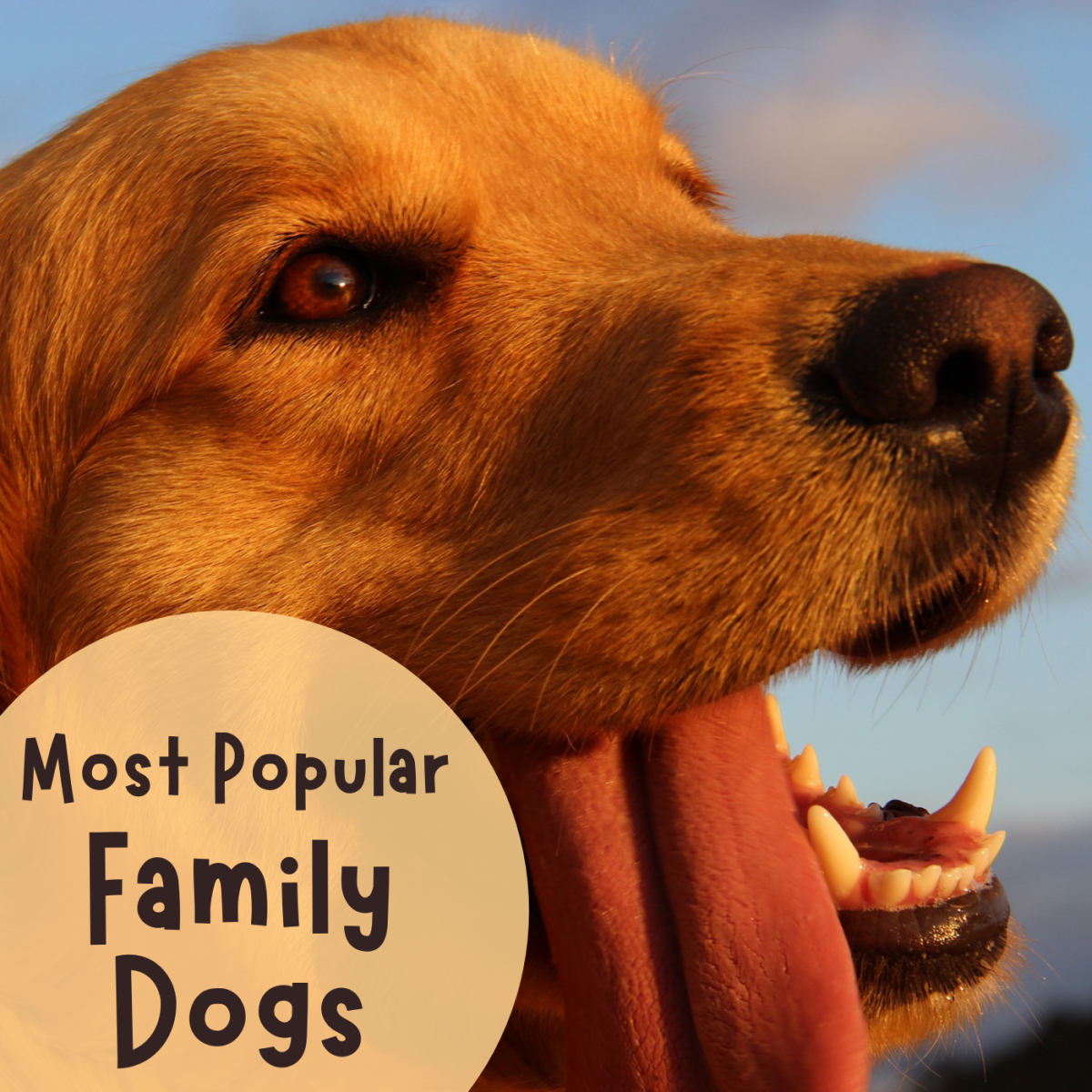 Best Family Dog Breeds: Five Most Popular in the U.S.