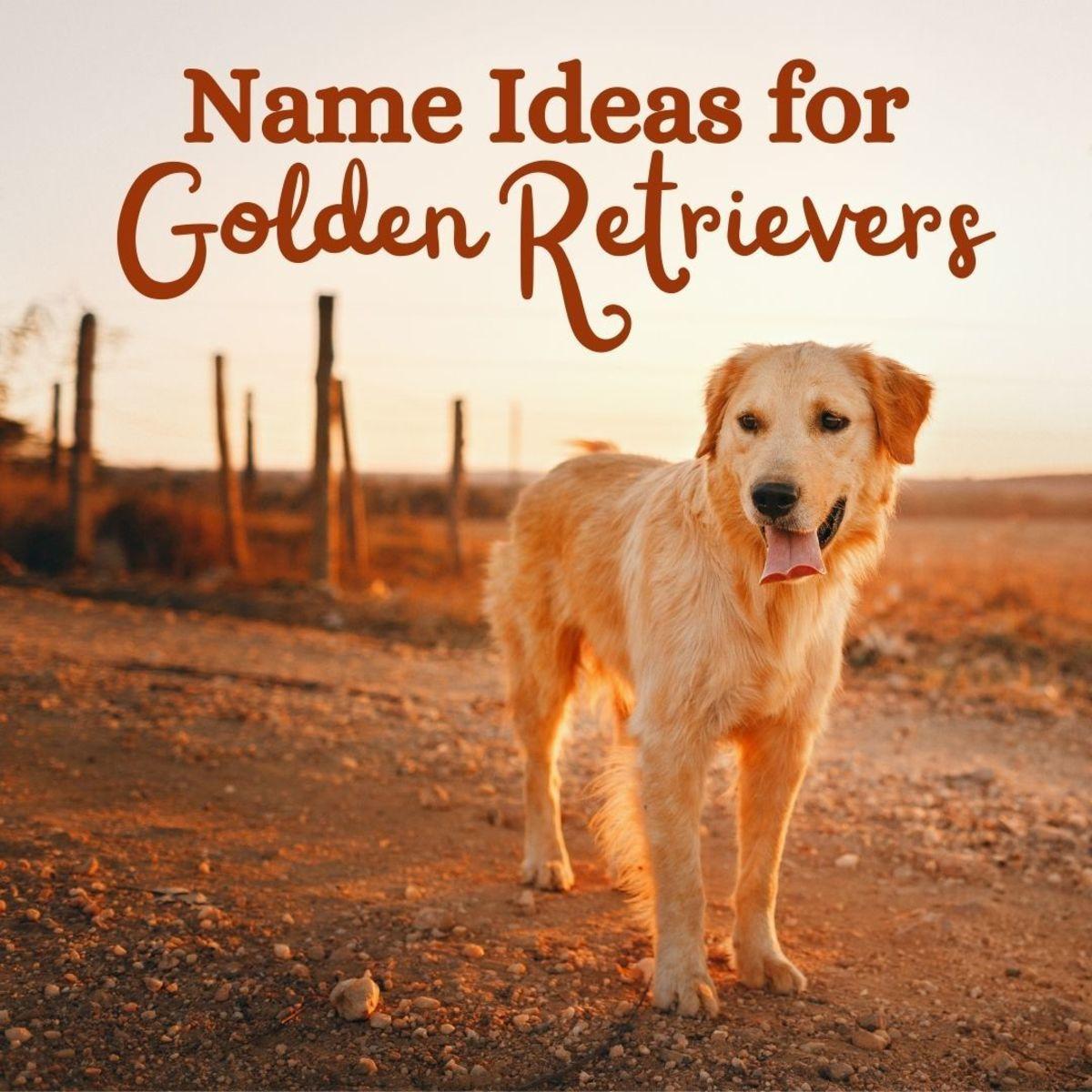 60+ Golden Retriever names