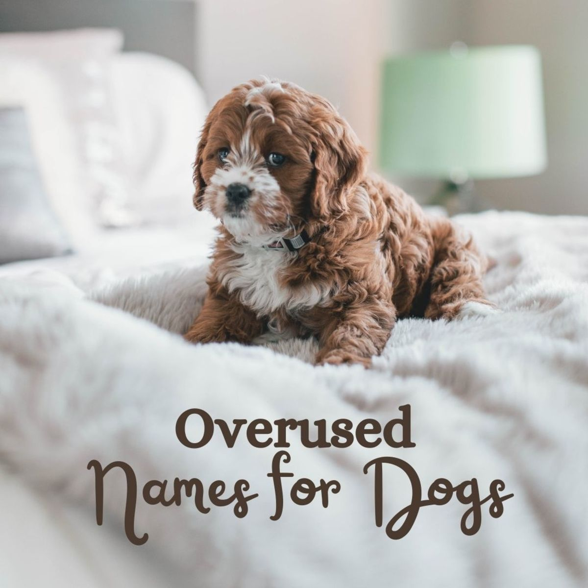 The Top 50 Most Overused Dog Names of All Time