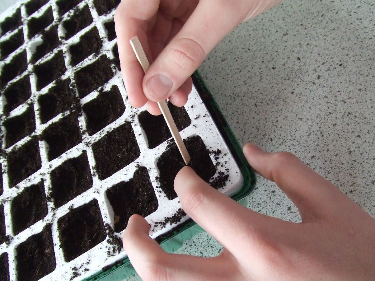 Planting seeds can be a great Beltane activity to do with children.