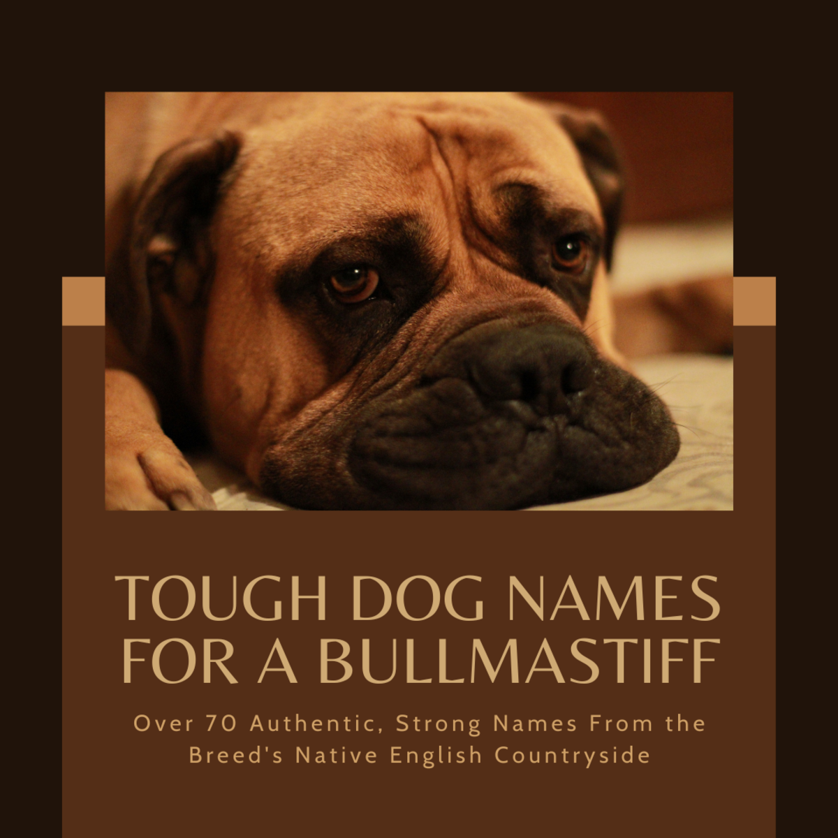 Tough Dog Names From England for a Bullmastiff