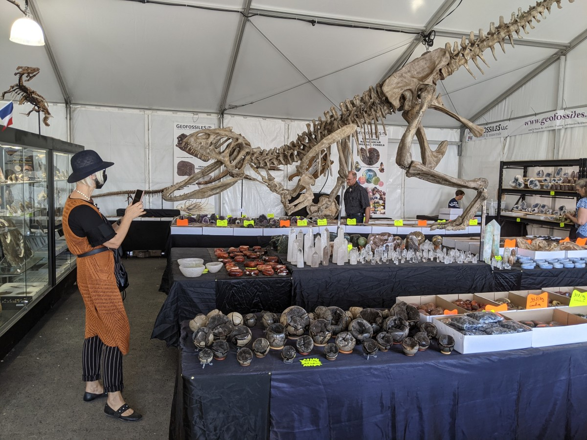 My wife taking a picture of a small dinosaur  skeleton at a booth selling fossils