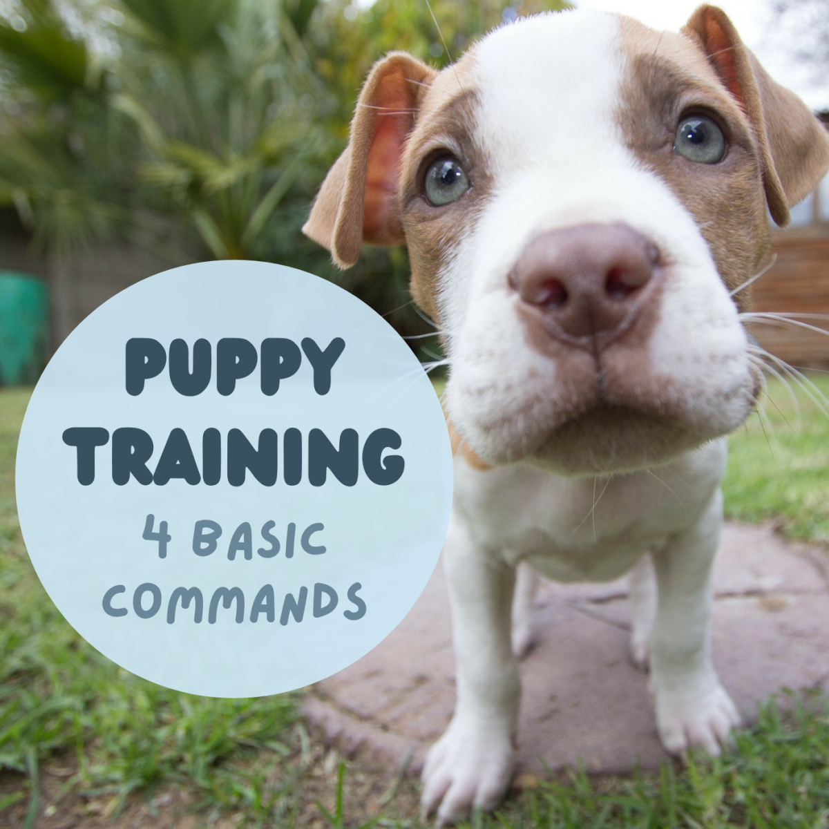 4 Basic Commands to Start Teaching and Training a Puppy Early
