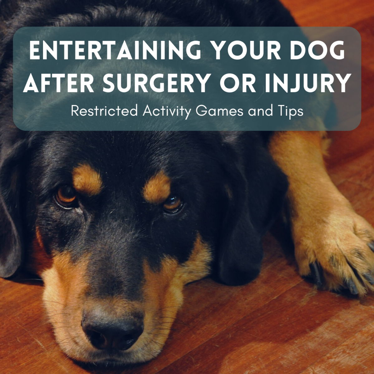 Get ideas for how to keep your pup occupied while they're recovering from surgery or an injury.
