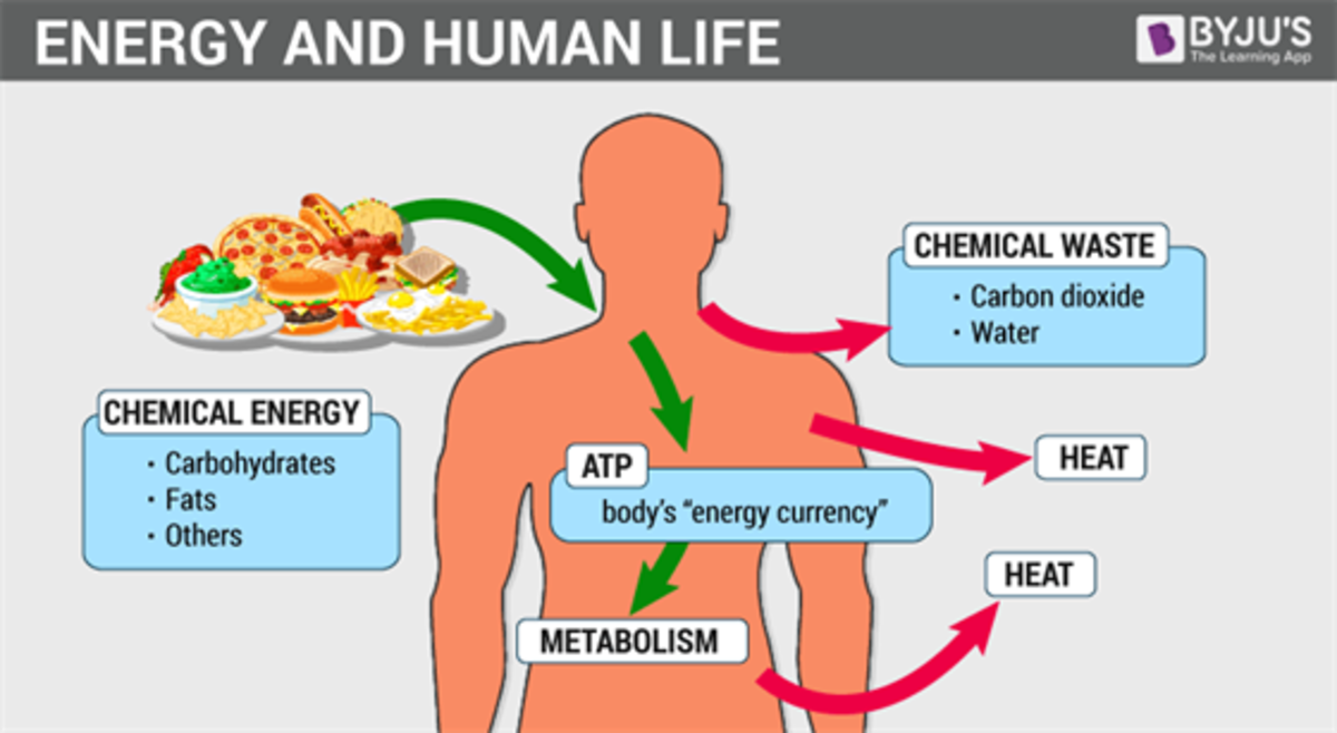 ways-to-increase-your-metabolism-for-healthy-life
